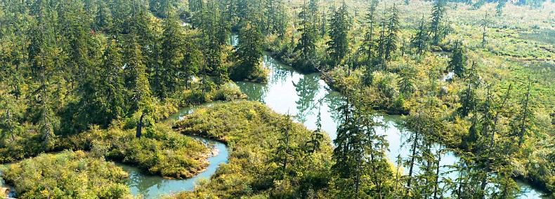 Chehalis river surge plain natural area preserve wa dnr for Chehalis river fishing