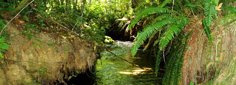 Skookum Inlet Natural Area Preserve