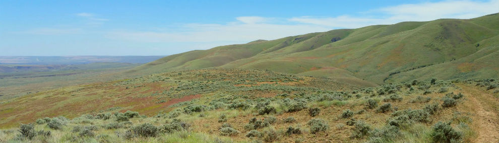 Shrub steppe at Badger Mountain