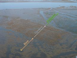 Floating over mosaic habitat