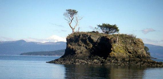 Cypress Island Reserve